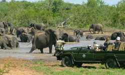Kruger Safari In South Africa